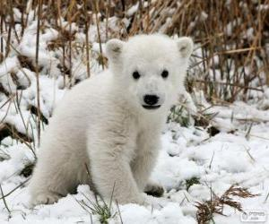 puzzel Een kleine beer