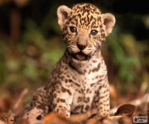 puzzel Een kleine jaguar