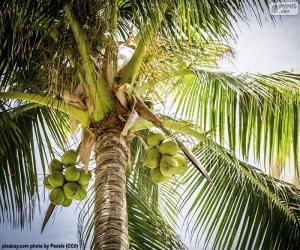 puzzel Een kokosnootboom