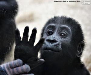puzzel Een nieuwsgierig aap