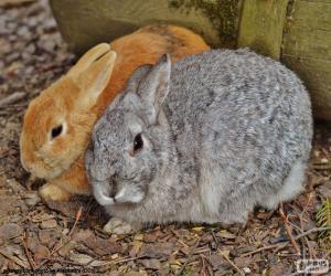 puzzel Een paar van konijnen