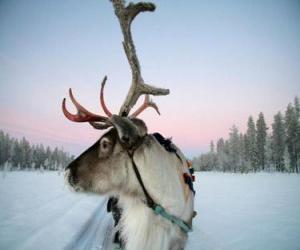 puzzel Een rendier Kerstman trekken van een slee
