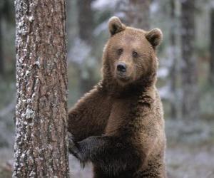 puzzel Europese bruine beer in voet rust op een boom