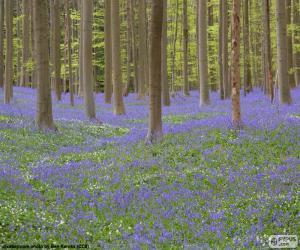 puzzel Forest Hallerbos, België