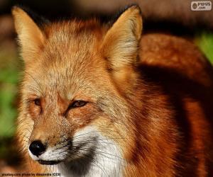 puzzel Fox hoofd