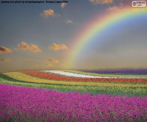 puzzel Gebied van bloemen