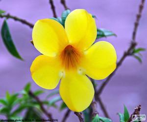 puzzel Gele bloem van vijf bloemblaadjes