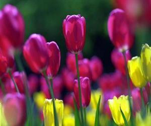 puzzel Gemengde lentebloemen