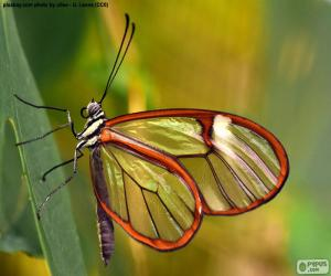 puzzel Glasswing vlinder, Greta oto
