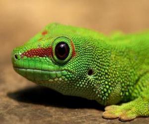 puzzel Green Lizard