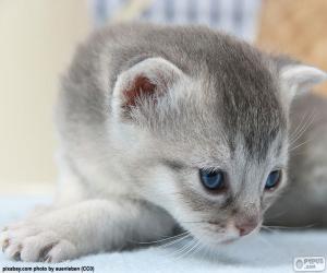 puzzel Grijs blauwe ogen kat