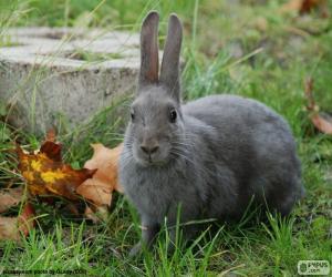 puzzel Grijs konijn