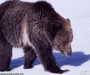 puzzel Grizzlybeer