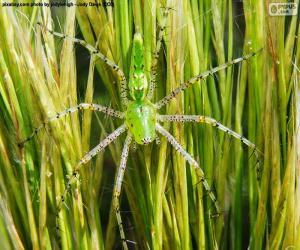 puzzel Groene lynx spin