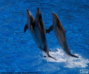 puzzel Groep dolfijnen springen