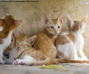 puzzel Groep katjes