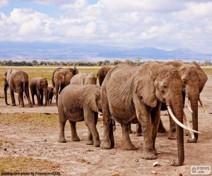 puzzel Groep van olifanten
