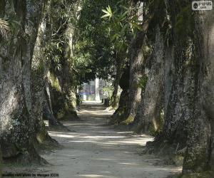 puzzel Grote bomen, Brazilië
