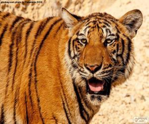 puzzel Grote tijger