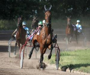 puzzel Harness Racing
