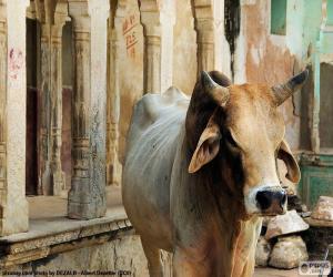 puzzel Heilige koe, India