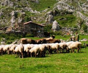 puzzel Herder zijn kudde verzorgen