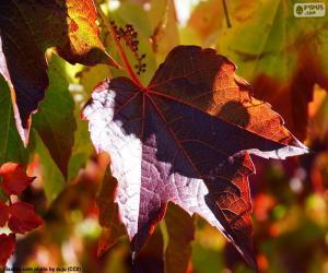 puzzel Herfst in de wijngaard