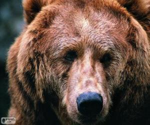 puzzel Het hoofd van een grote beer