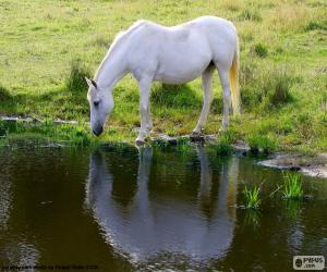 puzzel Het witte paard drinken