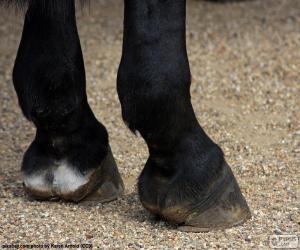 puzzel Hoeven van het paard