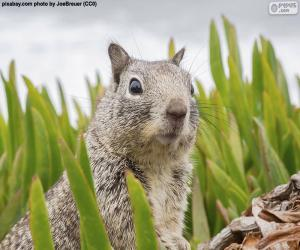 puzzel Hoofd van de eekhoorn
