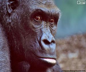 puzzel Hoofd van de Gorilla