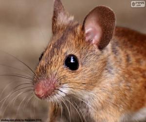 puzzel Hoofd van de muis