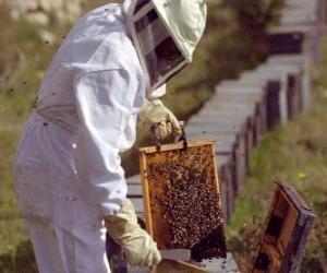 puzzel Imker of apiarist werken met de speciaal pak in de korf te verzamelen honing
