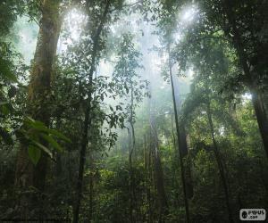 puzzel Interieur van de jungle