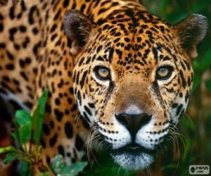 puzzel Jaguar hoofd