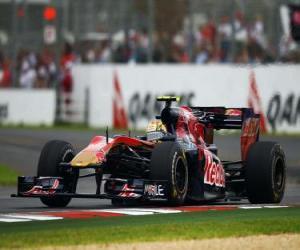 puzzel Jaime Alguersuari - Toro Rosso - Melbourne 2010