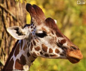 puzzel Jonge giraffe