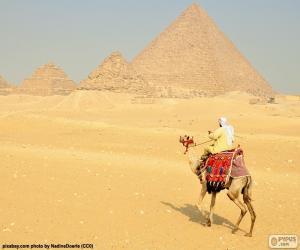 puzzel Kameel front piramides