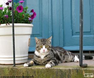 puzzel Kat en bloempot