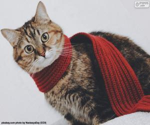 puzzel Kat in sjaal