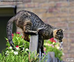 puzzel Kat op een hek
