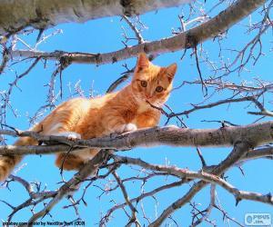 puzzel Kat op een tak