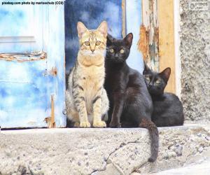 puzzel Katten bij de deur