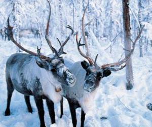puzzel Kerst rendier in het bos