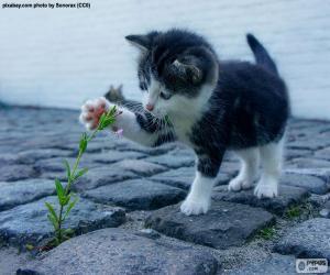 puzzel Kitten en plant
