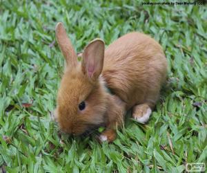 puzzel Kleine Bunny