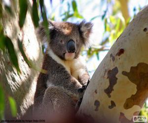 puzzel Koala in een boom