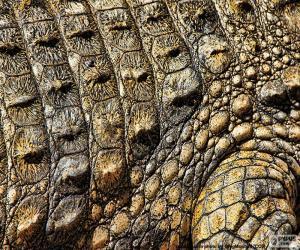 puzzel Krokodilhuid