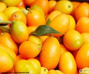 puzzel Kumquat